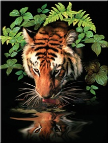 r-06859_thirsty-tiger